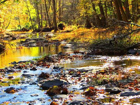 Babbling Creek, Autumn Trees, Brook, Peaceful, Remote