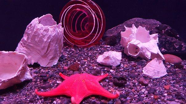 Starfish, Seastar, Ocean, Sea, Star, Beach, Water