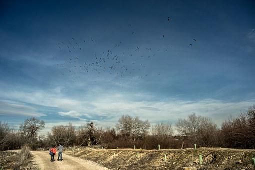 Trail, Walk, Birds, Migration, Path, Hiking, Landscape