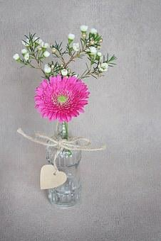 Gerbera, Frangipani, White, Pink, Blossom, Bloom, Vase