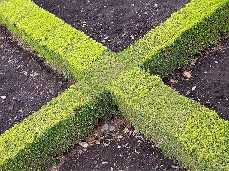 Cross, X, Hedge, Box, Knot, Gardening, Saltire, Formal