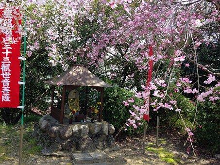 Spring, Cherry, Flowers, Japan