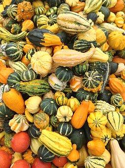 Pumpkin, Versatile, Fruit, Gourd, Colorful, Decoration
