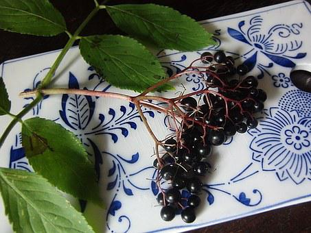 Elder, Berries, Black Elderberry, Elderberries, Holler