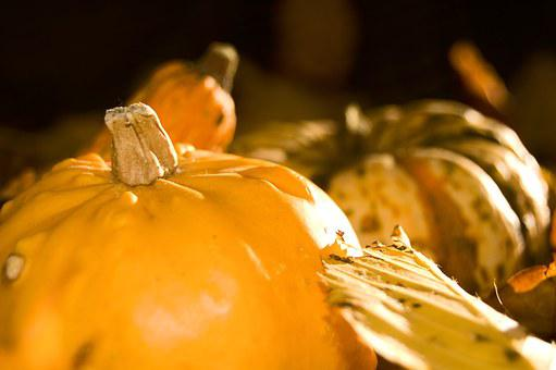 Pumpkin, Yellow, Autumn, Pumpkins, Gourd, Harvest