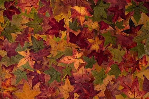 True Leaves, Leaves, Colorful, Autumn Leaf, Structure