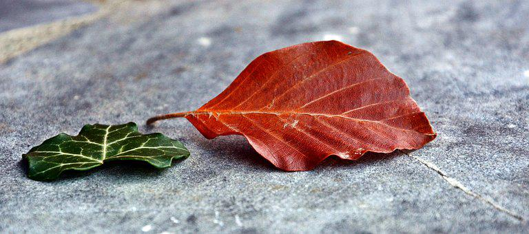 Amber, Leaves, Two