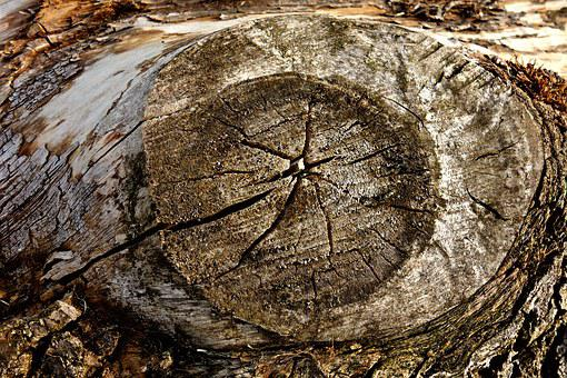 Knot, Wood, Log, Timber, Dead Wood, Rings, Texture