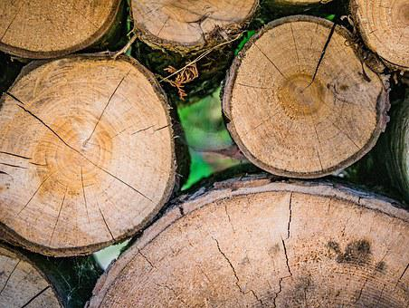 Wood, Tree, Forest, Nature, Structure, Black Forest