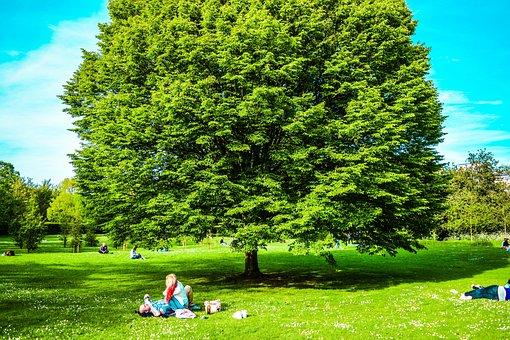 United Kingdom, London, Park, St James' Park, Wood, Sky