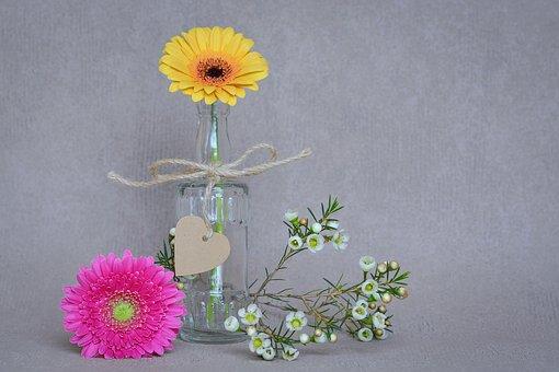 Flowers, Gerbera, Yellow, Pink, Petals, Frangipani