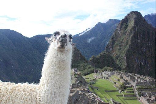 Llama, Machu Picchu, Peru, Animal, Landscape, Mountains