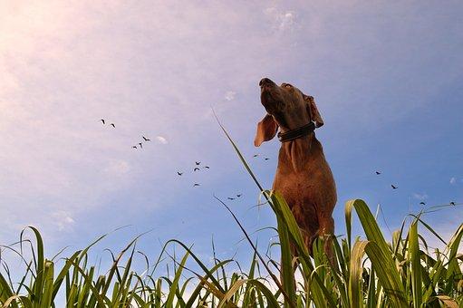 Dog, Prairie, Grass, Look, Birds, Warm, Sky, Animal