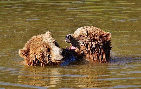 Bear, Water, Play, Animal World, Animal, Predator Kind