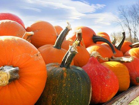 Pumpkins, Gourds, Pumpkins Ands Gourds, Autumn