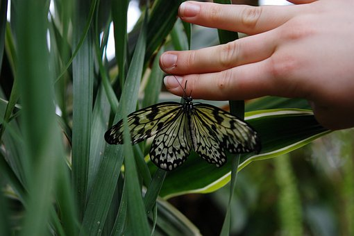 Butterfly, Animal, Hand, Papilio Machaon, Wildlife