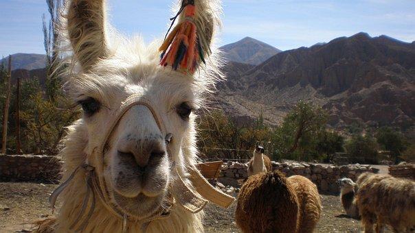 Flame, North, Jujuy, Coya, Colla, Cholitas, Andes