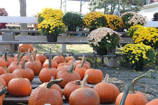 Pumpkin, Flowers, Orange, Fall, Holiday, Thanksgiving