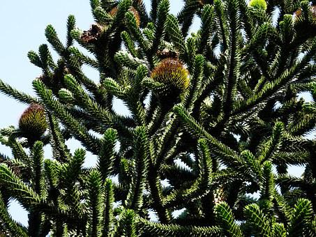 Monkey Tree, Green, Seed Balls