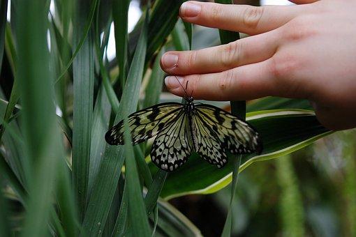 Butterfly, Animal, Hand, Papilio Machaon, Wildlife