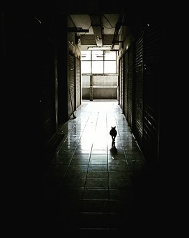 Corridor, Dark, Cat, Way, Light, Tunel, Pet, Scarry