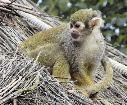 Paris, Zoo, Vincennes, Animal, Primate, Monkey, Green
