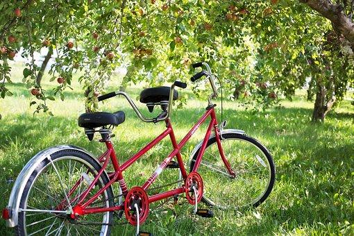 Tandem Bike, Bicycle, Apple Orchard, Apples, Bike