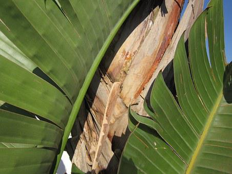Close, Background, Banana Shrub, Banana Leaves, Nature