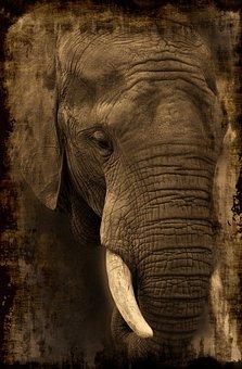 Elephant, Africa, Safari, Animal, African Bush Elephant