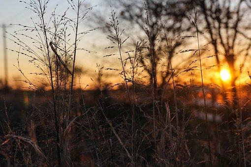 Sunrise, Wheat, Mckinney, Field, Agriculture, Landscape
