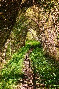Nature, Graze, Path, Tunnel, Willow Tunnel