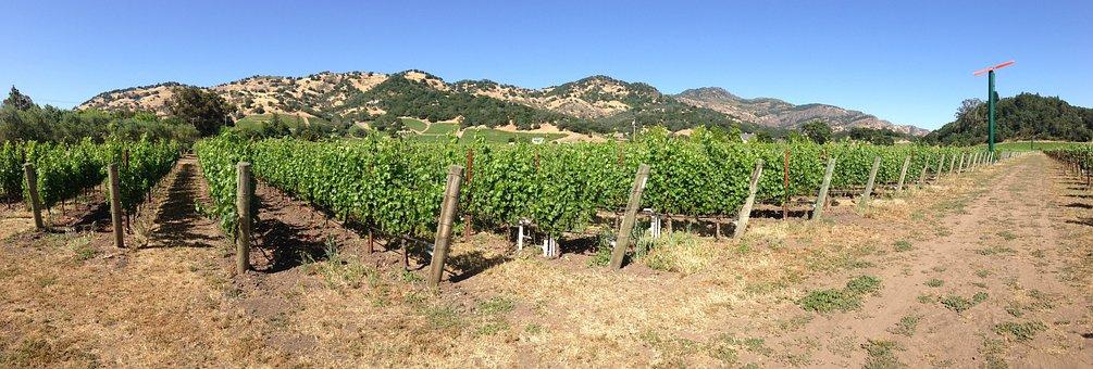Napa Valley, Napa, Yountville, Vineyard, Wine, Valley