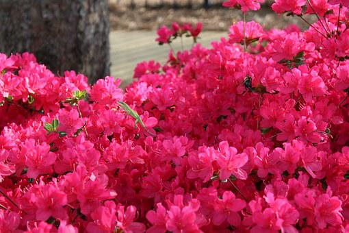 Pink, Flowers, Lizard, Green, Contrast, Beauty, Spring