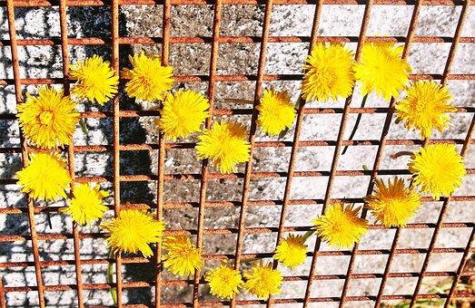 Heart, Yellow, Dandelions, Daisies, Rusty Metal Grid