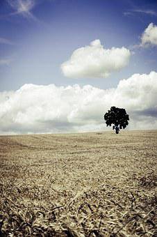 Field, Wheat, Cereals, Agriculture, Summer, Sky
