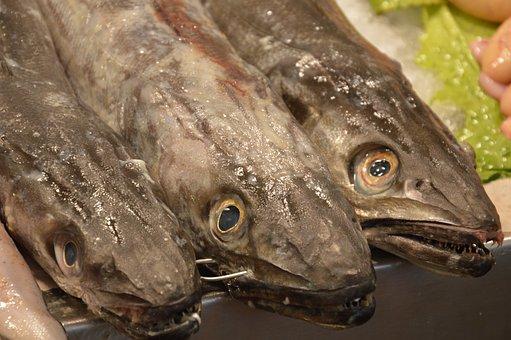 Fish, Market, Spain, Cadiz, Fresh, Food, Fish Market