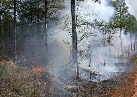 Control Burning, Prescription, Tree, Trees, Timber