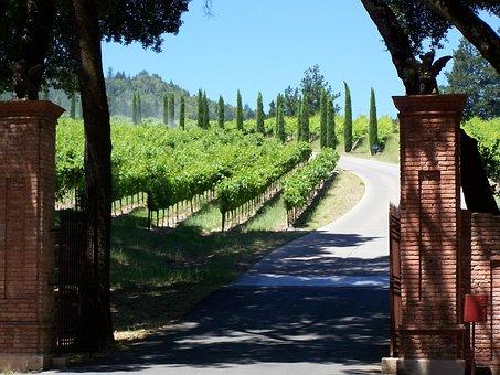 Winery, Napa Valley, California, Wine Country