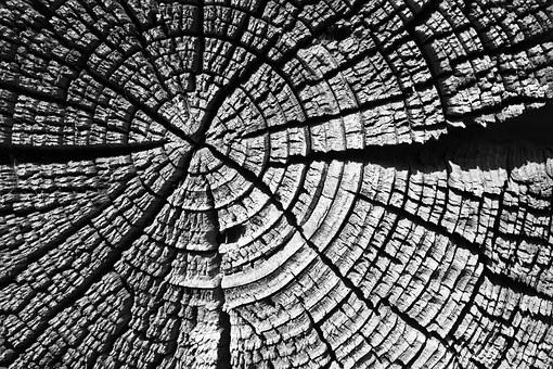 Tree, Wood, Wood Texture, Village, Nature, Dacha, Bath