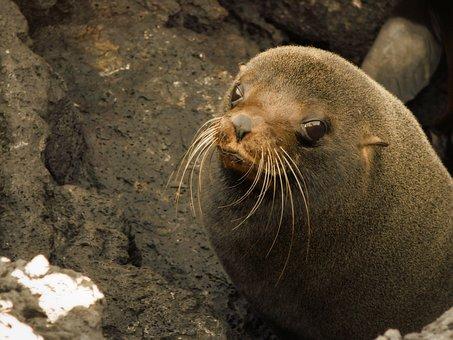 Sea Lion, Seal, Animal, Baby, Baby Sea Lion, Bay, Beach