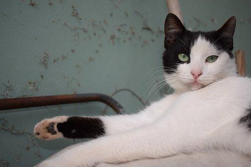 Cat, Black, White, Green Eyes, Pet, Animal, Green, Cute