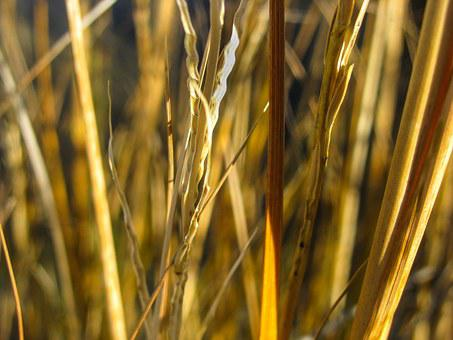Grass, Yellow, Leaves, Meadow, Leaf, Blades, Nature