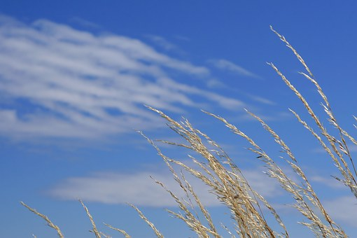 Agriculture, Blue, Clouds, Country, Crops, Cultivate