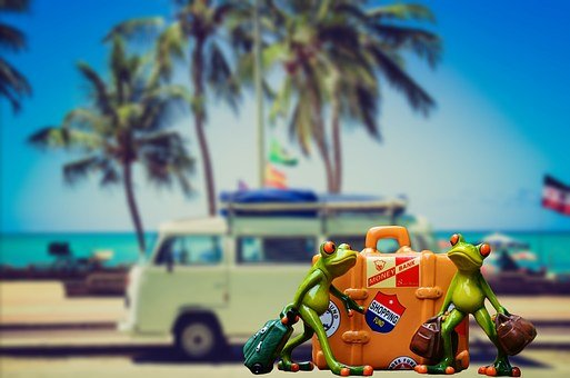 Holiday, Luggage, Palm Trees, Beach, Frog, Funny, Cute