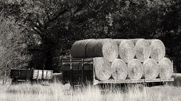 Hay, Bales, Farm, Agriculture, Nature, Straw, Rural