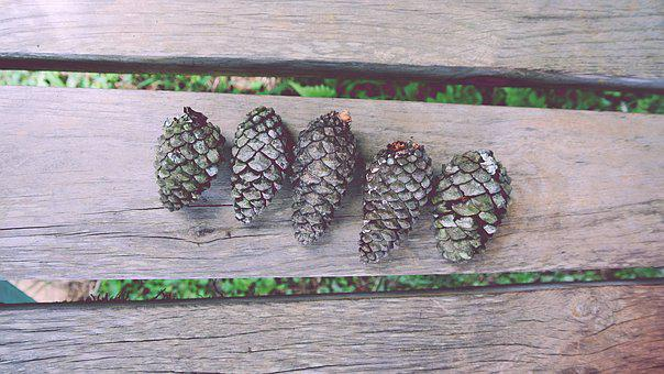 Close-up, Conifer Cones, Fir Cones, Hardwood, Lumber