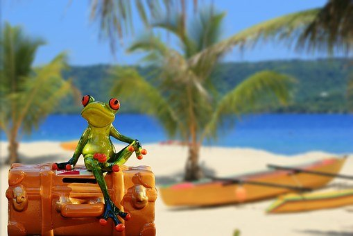 Vacations, Luggage, Palm Trees, Beach, Frog, Funny