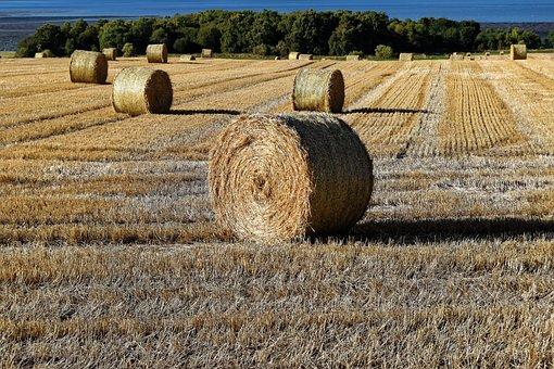 Hay, Bales Of Hay, Hay Bales, Farm, Bale, Straw