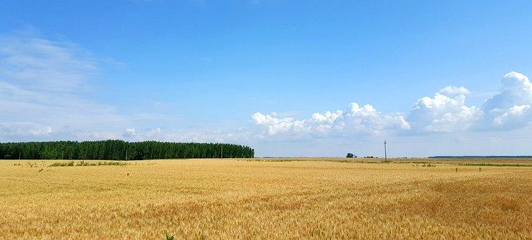 Hungary, Field, Wheat, Landscape, Wheatfield, Summer