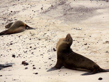 Sea, Lions, Beach, Galapagos, Islands, Ecuador